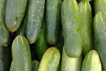 1280px-cucumber_closeup-723x347_c