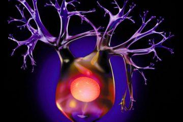 neuron rendering on black /4193R-1180