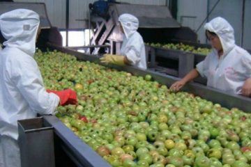 apple-picking-690x361