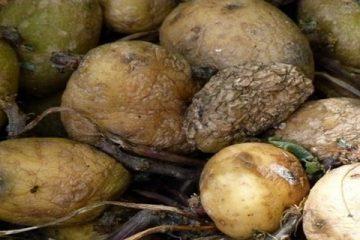 patates-pourries