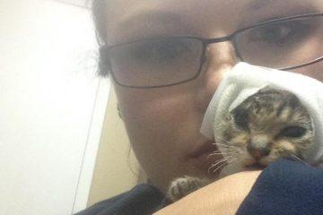 Personne ne voulait câliner ce chaton. Elle l'a pris dans ne l'a plus quitté...attendez de le voir aujourd'hui !