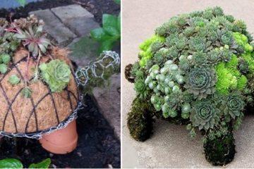 Voici comment confectionner une tortue-jardin avec des plantes grasses et de la mousse 1
