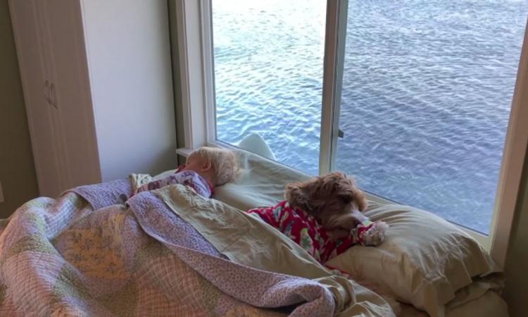 tous les jours ce petit se r veille c t de son chien pr parez vous sentir votre c ur. Black Bedroom Furniture Sets. Home Design Ideas