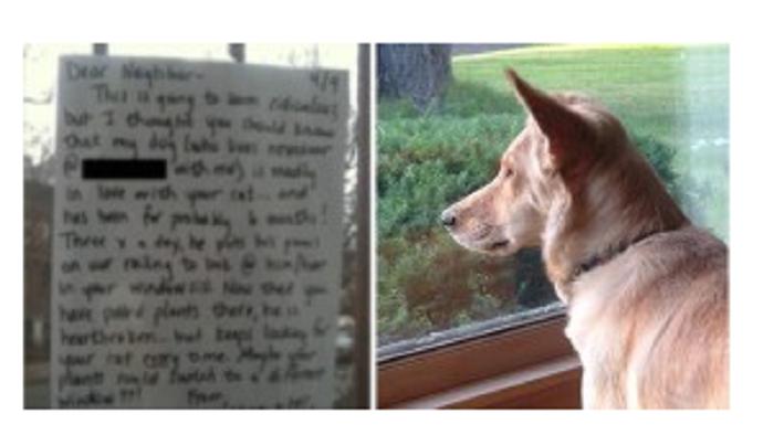 Ce chien fixe la fen tre du voisin et ce depuis 6 mois for Fenetre chien assis prix