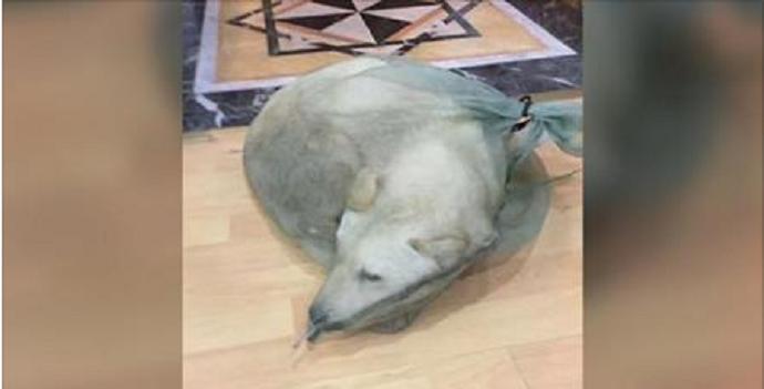 ce pauvre chien devait finir comme viande manger un jeune homme a r agit tr s rapidement. Black Bedroom Furniture Sets. Home Design Ideas